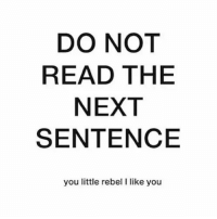 Next, You, and Read: DO NOT  READ THE  NEXT  SENTENCE  you little rebel I like you