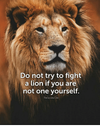 Club, Memes, and Lion: Do not try to fight  a lion if you are  not one yourself  The Success Club Tag someone 🔥 thesuccessclub