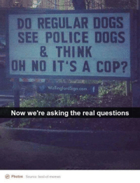Yes !: DO REGULAR DOGS  SEE POLICE DOGS  & THINK  OH NO IT'S A COP?  Wallingford Sign com  Now we're asking the real questions  Ce Photos source: best of memes Yes !