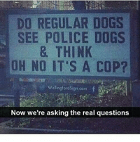 Dank, Dogs, and Funny: DO REGULAR DOGS  SEE POLICE DOGS  & THINK  OH NO IT'S A COP?  Wallingtordsign conn  Now we're asking the real questions I have exams in a few weeks😫 * 😏Follow if you're new😏 * 👇Tag some homies👇 * ❤Leave a like for Dank Memes❤ * Second meme acc: @cptmemes * Don't mind these 👇👇 Memes DankMemes Videos DankVideos RelatableMemes RelatableVideos Funny FunnyMemes memesdailybestmemesdaily coos Codmemes police cop Meme policedog Gaming gta5 bo2 ww2 mw2 Xbox Ps4 Psn Games VideoGames Comedy Treyarch sidemen sdmn