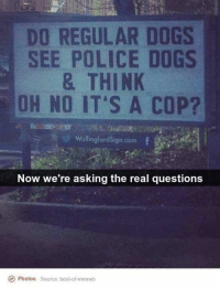 Dogs, Memes, and Police: DO REGULAR DOGS  SEE POLICE DOGS  & THINK  OH NO IT'S A COP?  WallingfordSign.com f  Now we're asking the real questions  Photos Source: best-of-memes