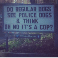 Dogs, Police, and Cop: DO REGULAR DOGS  SEE POLICE DOGS  & THINK  OH NO IT'S A COP?  WallingfordSign.comf   Do normal dogs hear deaf dogs the way we hear deaf people?