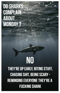 Fucking, Shit, and Shark: DO SHARKS  COMPLAIN  ABOUT  MONDAY?  NO  THEY'RE UP EARLY, BITING STUFF,  CHASING SHIT, BEING SCARY  REMINDING EVERYONE THEY'REA  FUCKING SHARK