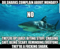 MT: DO SHARKS COMPLAIN ABOUT MONDAY?  NO  THEYRE UPEARLY BITING STUFF CHASING  SHIT, BEING SCARY REMINDING EVERYONE  THEY'RE A FUCKING SHARK. MT