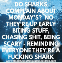 Friends, Fucking, and Memes: DO SHARKS  COMPLAIN ABOUT  MONDAY'S? NO  THEY RE UP EARLY  BITING STUFF,  CHASING SHIT, BEING  SCARY - REMINDING  EVERYONE THEYREA  FUCKING SHARK  www.UncleSamsMisguidedChildren.com LINK IN BIO Tag all your friends to follow @unclesamsmisguidedchildren UncleSamsMisguidedChildren USMCNation USMC SecondAmendment Constitutionalist Veteran Capitalist HillaryForPrison CrookedHillary HillaryForGitmo WikiLeaks Trump2016 MakeAmericaGreatAgain NeverHillary HillaryForPrison2016 Politics News DevilDog Outlaw MarineVeteran 0311