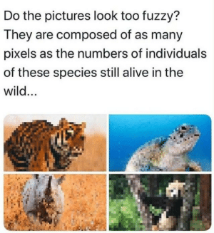 Wake up Reddit we have species to save via /r/memes https://ift.tt/2BDcdDW: Do the pictures look too fuzzy?  They are composed of as many  pixels as the numbers of individuals  of these species still alive in the  wild... Wake up Reddit we have species to save via /r/memes https://ift.tt/2BDcdDW