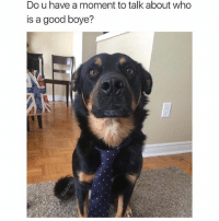 Let's talk, but make it quick. (@dogsbeingbasic) meme by: @ship: Do u have a moment to talk about who  is a good boye? Let's talk, but make it quick. (@dogsbeingbasic) meme by: @ship