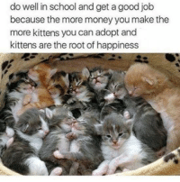 Memes, Money, and School: do well in school and get a good job  because the more money you make the  more kittens you can adopt and  kittens are the root of happiness