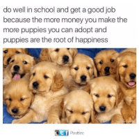 Funny, Money, and Puppies: do well in school and get a good job  because the more money you make the  more puppies you can adopt and  puppies are the root of happiness  Ef  Postize Like Pupper Doggo for more <3