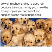 Cute, Funny, and Memes: do well in school and get a good job  because the more money you make the  more puppies you can adopt and  puppies are the root of happiness @drsmashlove has cute memes