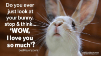 Bunnies, Love, and Memes: Do you ever  just look at  your bunny,  stop & think..  WOW  I love you  so much'?  Best4 bunny com  Pic: rabbit residence rescue  unniestotheblogspot.com All the time! www.best4bunny.com