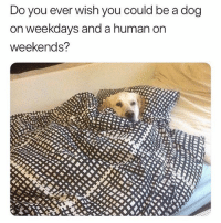 Funny, Memes, and Best: Do you ever wish you could be a dog  on weekdays and a human on  weekends? @epicfunnypage has the best memes