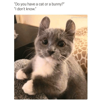 """""""Do you have a cat or a bunny?  """"I don't know  hilarious ted Too cute 😭❤ @casualterry follow my buddy @casualterry @casualterry ✔ . cat bunny cute"""