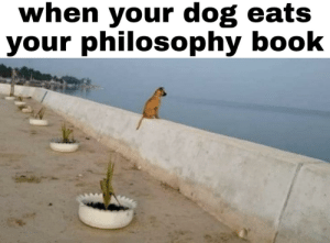 Do you have a dog yourself? by MorningMenu MORE MEMES: Do you have a dog yourself? by MorningMenu MORE MEMES