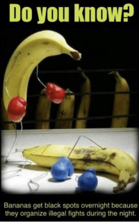 Club, Fight Club, and Black: Do you know?  Bananas get black spots overnight because  they organize illegal fights during the night. First rule of fight club..