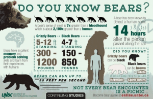 Bears.  Beets.  Battlestar Galactica.: DO YOU KNOW BEARS?  A bear has been known to  detect a human scent  A bear's sense of smell is 7x greater than a bloodhound  which is about 2,100x greater than a human  14 hours  Grizzly BearsBlack Bears  after the person  passed along the trail  5-12 ft 4-7 ft  STANDING  STANDING  Bears have excellent  memory and  problem solving  skills and learn from  their experiences  with humans  300 150-  1200 850  DID YOU KNOW?  Grizzly bears  can be black  Black bears  can be brown  or white  IN WHICH CASE THEY RE CALLED  POUNDS  POUNDS  BEARS CAN RUN UP TO  Kermode or Spirit Bears  50 FEET PER SECOND  NOT EVERY BEAR ENCOUNTER  IS A PICNIC...  Become bear aware at online.unbc.ca  UNBC  UNIVERSITY OF  CONTINUING STUDIES  NORTHERN BRITISH COLUMBIA Bears.  Beets.  Battlestar Galactica.