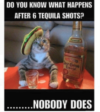 Today's theme: TEQUILA!: DO YOU KNOW WHAT HAPPENS  AFTER 6 TEQUILA SHOTS?  Premium  pecial  NOBODY DOES Today's theme: TEQUILA!