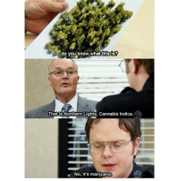 Memes, Cannabis, and 🤖: do you know what this is?  That is Northern Lights, Cannabis indica.  NP  No, it's marijuana.