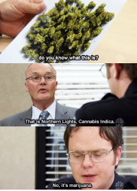 Low Key, Memes, and The Office: do you know what this is?  That is Northern Lights, Cannabis Indica  No, it's marijuana Creed low key was the best character in The Office. https://t.co/vbL6Q8mNSy