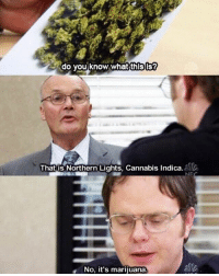 Disappointed, Memes, and Marijuana: do you know what thisis?  That is Northern Lights, Cannabis indica.  No, it's marijuana. He's so disappointed 😂