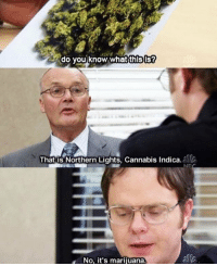 """Marijuana, What Is, and Cannabis: do you know what thisis?  That is Northern Lights, Cannabis indica  No, it's marijuana. """"what is this"""" https://t.co/Y4eTX7zzAz"""