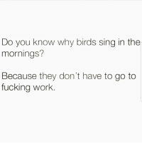 Ehhh 🙄🙄🙄😂😂 🔥 Follow Us 👉 @latinoswithattitude 🔥 latinosbelike latinasbelike latinoproblems mexicansbelike mexican mexicanproblems hispanicsbelike hispanic hispanicproblems latina latinas latino latinos hispanicsbe: Do you know why birds sing in the  mornings?  Because they don't have to go to  fucking work. Ehhh 🙄🙄🙄😂😂 🔥 Follow Us 👉 @latinoswithattitude 🔥 latinosbelike latinasbelike latinoproblems mexicansbelike mexican mexicanproblems hispanicsbelike hispanic hispanicproblems latina latinas latino latinos hispanicsbe