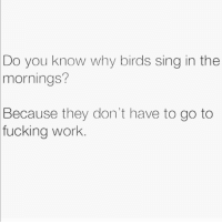Fucking, Memes, and Work: Do  you know why birds sing in the  mornings?  Because  they don't have to go to  work  fucking Lucky little shits 😤 goodgirlwithbadthoughts 💅🏼