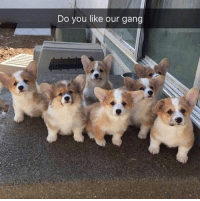 Dank, Gang, and Our Gang: Do you like our gang How do I join?