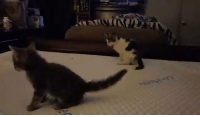 Do you need a little pick me up on hump day? Check out these cute kittens running around and doing what cats do best.: Do you need a little pick me up on hump day? Check out these cute kittens running around and doing what cats do best.