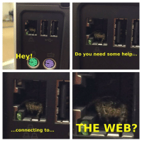 Help, You, and Hey: Do you need some help...  Hey  THE WVEB?  ...connecting to... Spiderbro