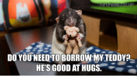 Memes, Blue, and Blues: DO YOU NEED TO BORROWMY TEDDYP  HE'S GOOD AT HUGS Feeling blue?