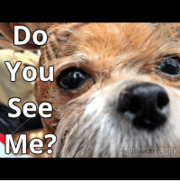 Do you see this post? PLEASE *Like* Comment* Share* Over the past year, less than 10% of our followers see our posts in their daily feed.  We cannot afford to pay to boost our posts daily.  That money needs to go to the animals we save.   The very platform that gave us wings to fly in earlier years & save hundreds of homeless pets each year, now requires payment, for everyone to be able to see our posts in their daily feed. This sadly has affected our donation base & unless we can generate more funding, we will be cutting our intake numbers in half. I will be fighting hard, not to do this, but will need your help. Please *Comment* below! Say anything from, where you are from, how long you have been following our page or a little bit about your beloved pet💕 I really have to push to keep our intake numbers strong. Because... They Can't Save Themselves.  PLEASE *LIKE* COMMENT* & *SHARE* your interaction gets us seen❤️  #everylifematters #aplacetobark #unitedbyloveforanimals: Do  You  See  Me?  HAPLACETOBARK Do you see this post? PLEASE *Like* Comment* Share* Over the past year, less than 10% of our followers see our posts in their daily feed.  We cannot afford to pay to boost our posts daily.  That money needs to go to the animals we save.   The very platform that gave us wings to fly in earlier years & save hundreds of homeless pets each year, now requires payment, for everyone to be able to see our posts in their daily feed. This sadly has affected our donation base & unless we can generate more funding, we will be cutting our intake numbers in half. I will be fighting hard, not to do this, but will need your help. Please *Comment* below! Say anything from, where you are from, how long you have been following our page or a little bit about your beloved pet💕 I really have to push to keep our intake numbers strong. Because... They Can't Save Themselves.  PLEASE *LIKE* COMMENT* & *SHARE* your interaction gets us seen❤️  #everylifematters #aplacetobark #unitedbyloveforan