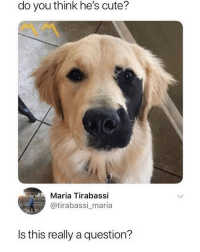 Cute, Memes, and 🤖: do you think he's cute?  Maria Tirabassi  @tirabassi_maria  Is this really a question? Cute
