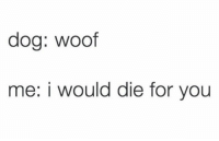 Humans of Tumblr, Doa, and You: doa: woof  me: i would die for you