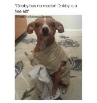 "Doooobby is freeee (@nationalmemeographic ): ""Dobby has no master! Dobby is a  free elf!""  National MemeoGraphic Doooobby is freeee (@nationalmemeographic )"