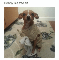 Dobby has no master (@hilarious.ted): Dobby is a free elf Dobby has no master (@hilarious.ted)