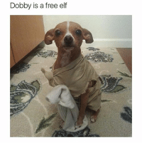 Elf, Funny, and Free: Dobby is a free elf Follow my backup @petroom