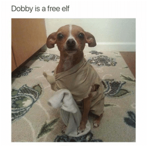 Master gave Dobby a sock: Dobby is a free elf Master gave Dobby a sock