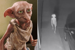 Real, Dobby, and Confirmed: dobby is real (confirmed)