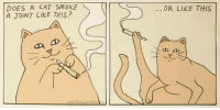 Cat, This, and Like: DOES A CAT SMOKE  A JOINT LIKE THIS?  OR LIKE THIS  nebolluna tumblem