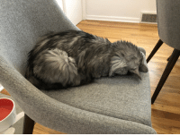 Head, Cat, and Style: Does anyone else have a cat that sleeps head-tuck style?