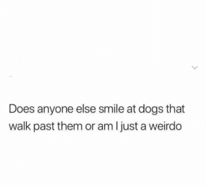 Dogs, Memes, and Help: Does anyone else smile at dogs that  walk past them or am I just a weirdo I can't help it