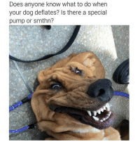 LMAOOOOI THIS DOGS FACE OML: Does anyone know what to do when  your dog deflates? Is there a special  pump or smthn? LMAOOOOI THIS DOGS FACE OML