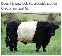 Oreo, Cow, and Oreos: Does this cow look like a double stuffed  Oreo or am just fat Someone help me out here.