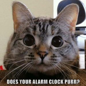 Clock, Memes, and Alarm: DOES YOUR ALARM CLOCK PURR?