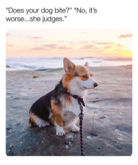 """Dog, She, and Bite: """"Does your dog bite?"""" """"No, its  worse...she judges.""""  33 ( Right in the feels."""