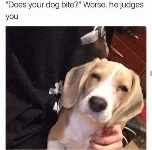 """asian dog: """"Does your dog bite?"""" Worse, he judges  you asian dog"""
