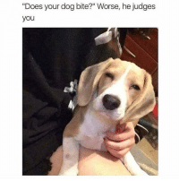 """Memes, 🤖, and Dog: """"Does your dog bite?"""" Worse, he judges  you Silently always judging. memesapp @memesmerch"""