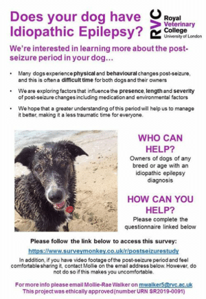 New survey💜: Does your dog ha  Idiopathic Esyi  5  oya  Veterinary  College  University of London  We're interested in learning more about the post-  seizure period in your dog...  Many dogs experiencephysical and behavioural changes post-seizure,  and this is often a difficult time for both dogs and their owners  of post-seizure changes including medication and environmental factors  it better, making it a less traumatic time for everyone.  .We are exploring factors that influence the presence, length and severity  .We hope that a greater understanding of this period will help us to manage  WHO CAN  HELP?  Owners of dogs of any  breed or age with an  idiopathic epilepsy  diagnosis  HOW CAN YOU  HELP?  Please complete the  questionnaire linked below  Please follow the link below to access this survey:  https://www.surveymonkey.co.uk/r/postseizurestudy  In addition, if you have video footage of the post-seizure period and feel  comfortable sharing it, contact Mollie on the email address below. However, do  not do so if this makes you uncomfortable.  Formore info please email Mollie-Rae Walker on mwalker5@rvc.ac.uk  This projectwas ethically approved (number URN SR2019-0091) New survey💜