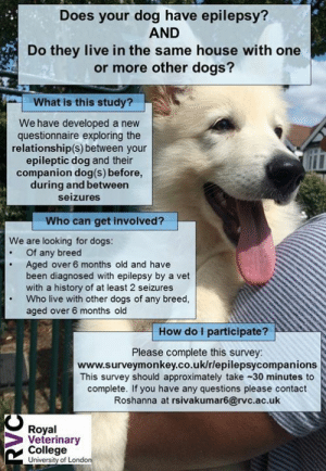 A new study  Final bioveterinary science student Roshaana is interested in exploring dog-dog relationships in households with   Please complete the following questionnaire if you have a dog with idiopathic epilepsy that lives with at least one other dog - each companion can be added within one survey, with up to four companions per epileptic dog.  https://www.surveymonkey.co.uk/r/epilepsycompanions  (N.B. If you have two or more epileptic dogs in the same household, please fill the questionnaire out for each dog individually): Does your dog have epilepsy?  AND  Do they live in the same house with one  or more other dogs?  What is this study?  We have developed a new  questionnaire exploring the  relationship(s) between your  epileptic dog and their  companion dog(s) before,  during and between  seizures  Who can get involved?  We are looking for dogs:  Of any breed  Aged over 6 months old and have  been diagnosed with epilepsy by a vet  with a history of at least 2 seizures  Who live with other dogs of any breed,  aged over 6 months old  How do I participate?  Please complete this survey  www.surveymonkey.co.uk/rlepilepsycompanion:s  This survey should approximately take-30 minutes to  complete. If you have any questions please contact  Roshanna at rsivakumar6@rvc.ac.uk  Royal  Veterinary  College  University of Londo A new study  Final bioveterinary science student Roshaana is interested in exploring dog-dog relationships in households with   Please complete the following questionnaire if you have a dog with idiopathic epilepsy that lives with at least one other dog - each companion can be added within one survey, with up to four companions per epileptic dog.  https://www.surveymonkey.co.uk/r/epilepsycompanions  (N.B. If you have two or more epileptic dogs in the same household, please fill the questionnaire out for each dog individually)